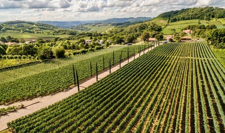 Port Wine Tawny How to Store Wine