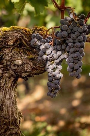 Port Wine Tawny When to Serve