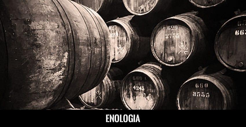 Enologia do Vinho do Porto